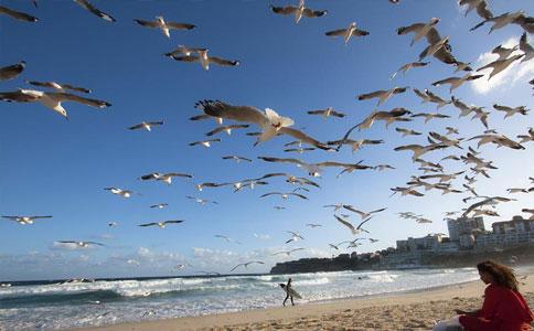 澳大利亚自然环境